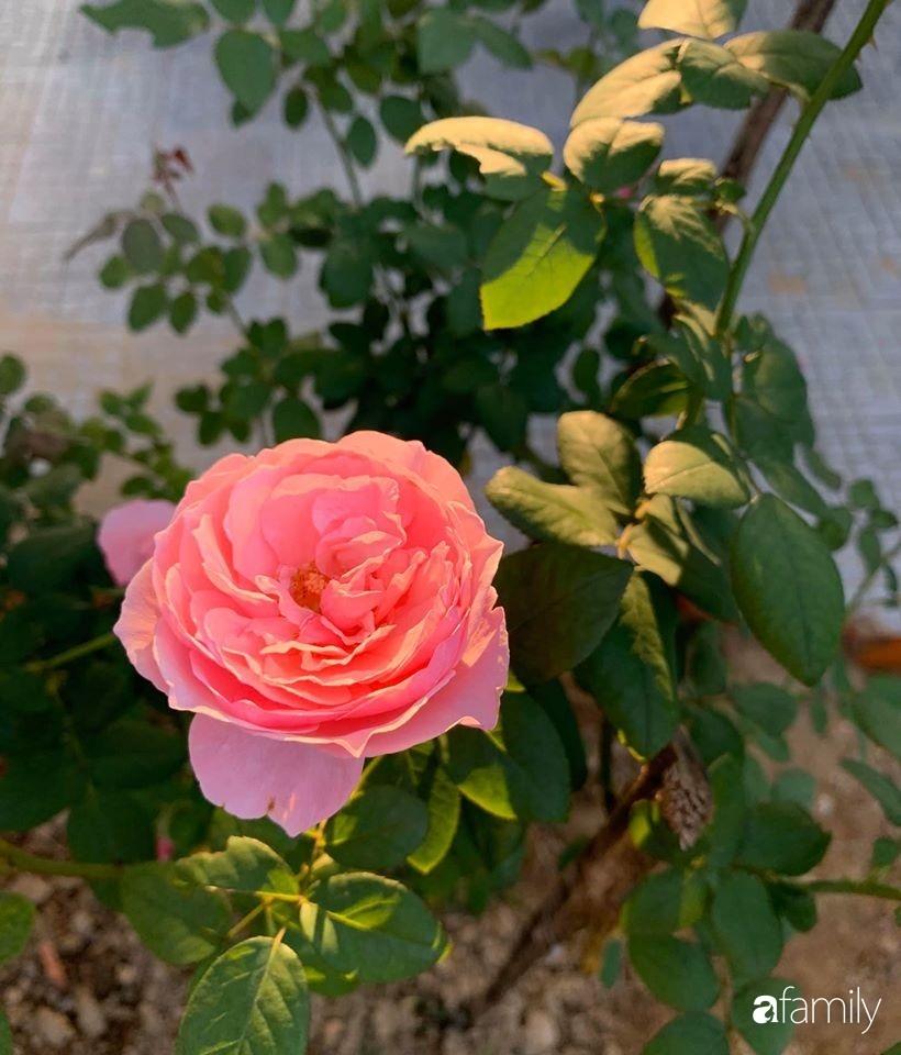 Ngôi nhà gần trăm năm tuổi bên cạnh khu vườn hoa hồng gói gọn những lặng lẽ, yên bình của xứ Huế mộng mơ-31