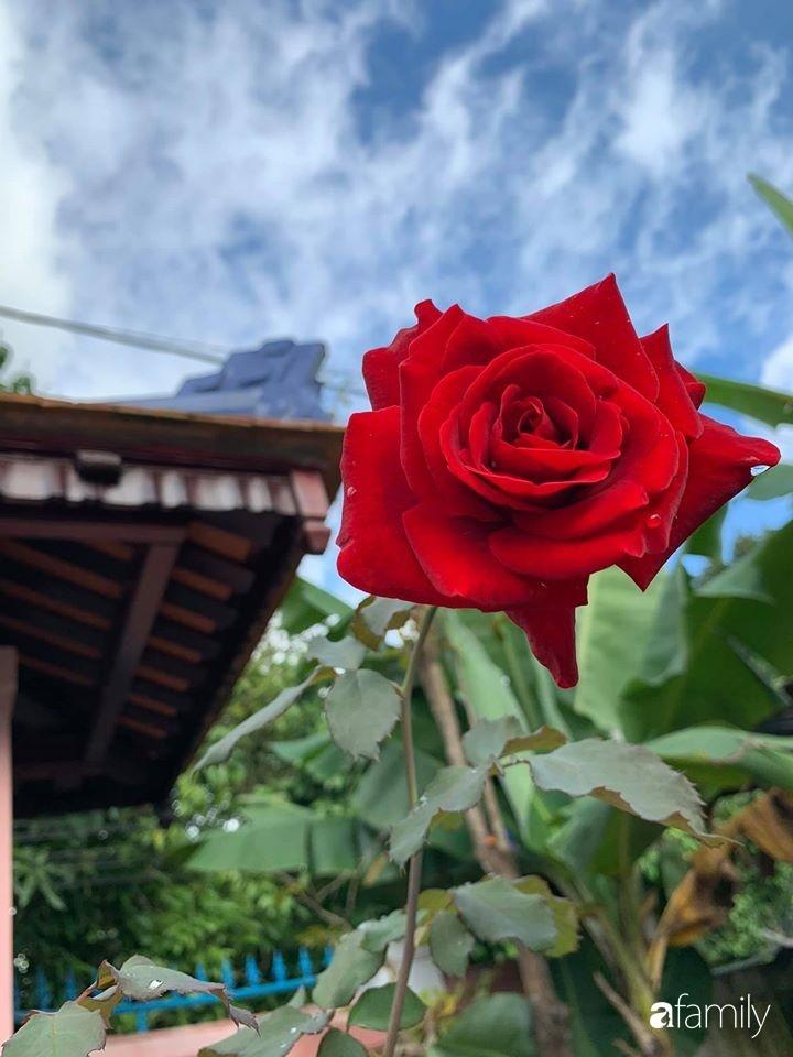 Ngôi nhà gần trăm năm tuổi bên cạnh khu vườn hoa hồng gói gọn những lặng lẽ, yên bình của xứ Huế mộng mơ-32