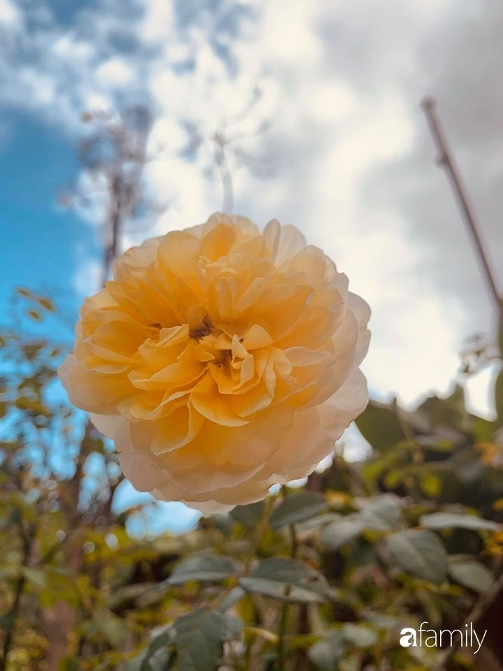 Ngôi nhà gần trăm năm tuổi bên cạnh khu vườn hoa hồng gói gọn những lặng lẽ, yên bình của xứ Huế mộng mơ-33