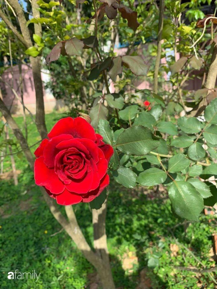 Ngôi nhà gần trăm năm tuổi bên cạnh khu vườn hoa hồng gói gọn những lặng lẽ, yên bình của xứ Huế mộng mơ-34