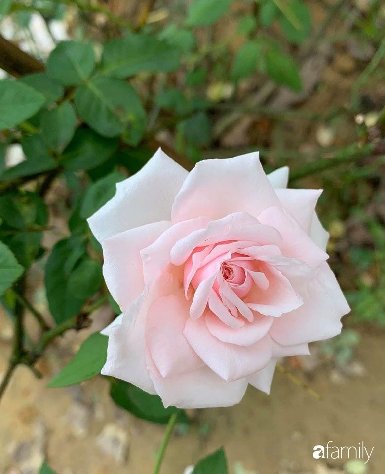 Ngôi nhà gần trăm năm tuổi bên cạnh khu vườn hoa hồng gói gọn những lặng lẽ, yên bình của xứ Huế mộng mơ-35