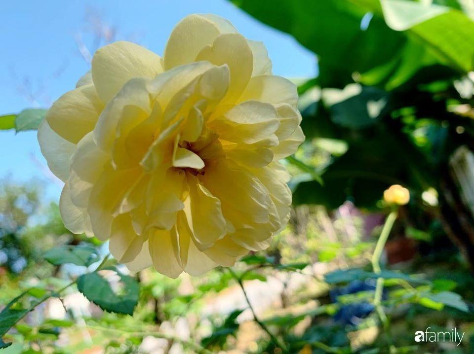 Ngôi nhà gần trăm năm tuổi bên cạnh khu vườn hoa hồng gói gọn những lặng lẽ, yên bình của xứ Huế mộng mơ-36