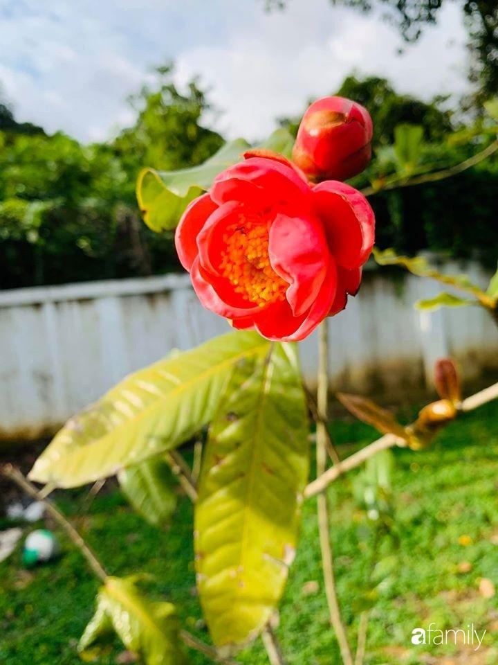 Ngôi nhà gần trăm năm tuổi bên cạnh khu vườn hoa hồng gói gọn những lặng lẽ, yên bình của xứ Huế mộng mơ-37