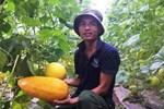 Bỏ lương 8 triệu về trồng dâu tây, soái ca nhà người ta lãi nửa tỷ-8