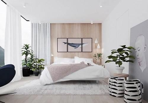 8 loại cây trồng trong phòng ngủ làm sáng bừng không gian, cải thiện giấc ngủ-1