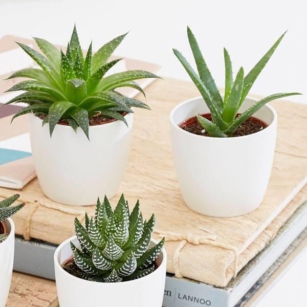 8 loại cây trồng trong phòng ngủ làm sáng bừng không gian, cải thiện giấc ngủ-3