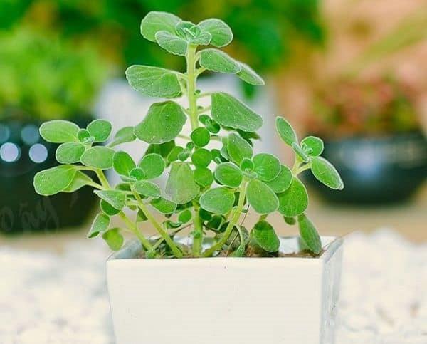 8 loại cây trồng trong phòng ngủ làm sáng bừng không gian, cải thiện giấc ngủ-4
