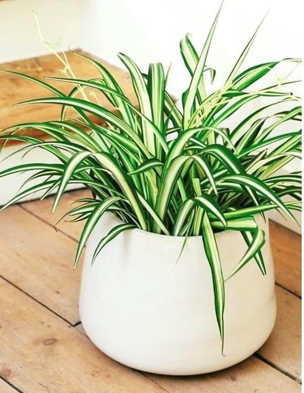 8 loại cây trồng trong phòng ngủ làm sáng bừng không gian, cải thiện giấc ngủ-6