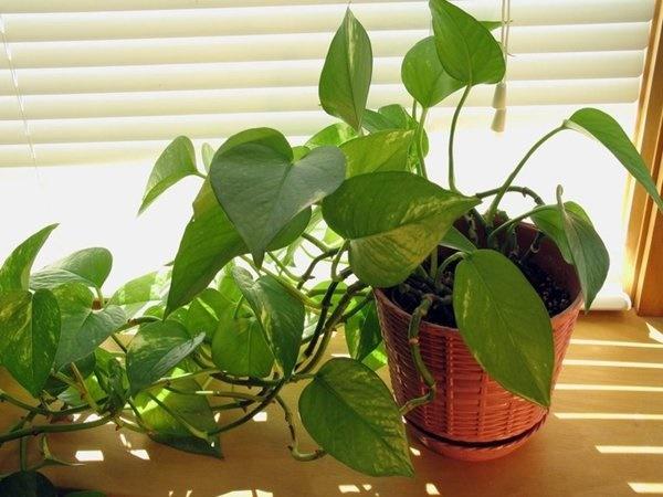 8 loại cây trồng trong phòng ngủ làm sáng bừng không gian, cải thiện giấc ngủ-9