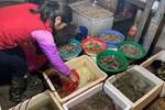 Mẹ đảm Hà Nội thất nghiệp ở nhà làm bánh gai bán online mỗi ngày kiếm 350k bỏ túi, đủ chi tiêu hàng ngày-8