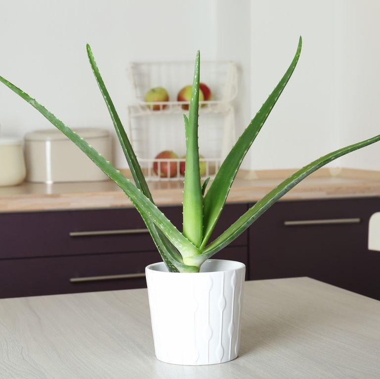 Gợi ý 9 loại cây cảnh tốt nhất có thể trồng trong nhà bếp để làm sáng không gian nhà bạn-1