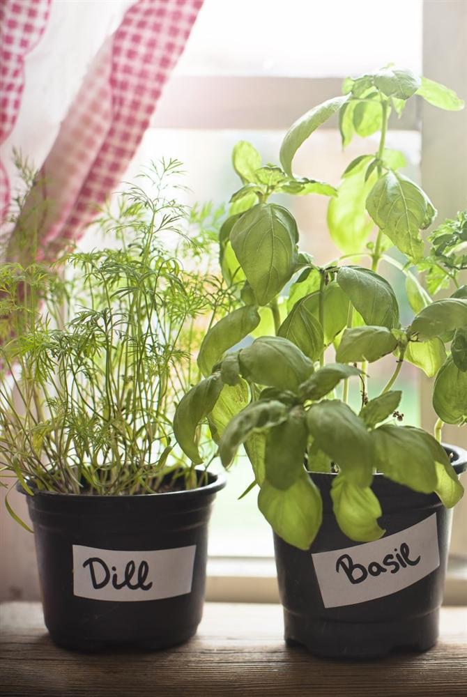 Gợi ý 9 loại cây cảnh tốt nhất có thể trồng trong nhà bếp để làm sáng không gian nhà bạn-2