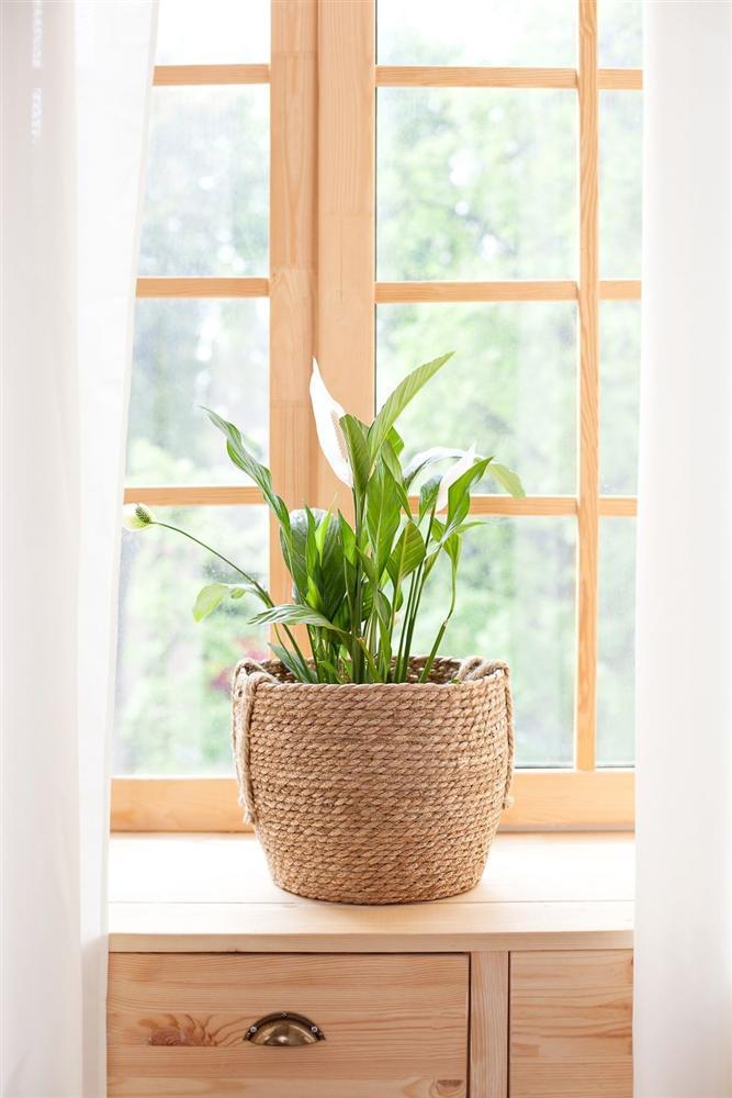 Gợi ý 9 loại cây cảnh tốt nhất có thể trồng trong nhà bếp để làm sáng không gian nhà bạn-4