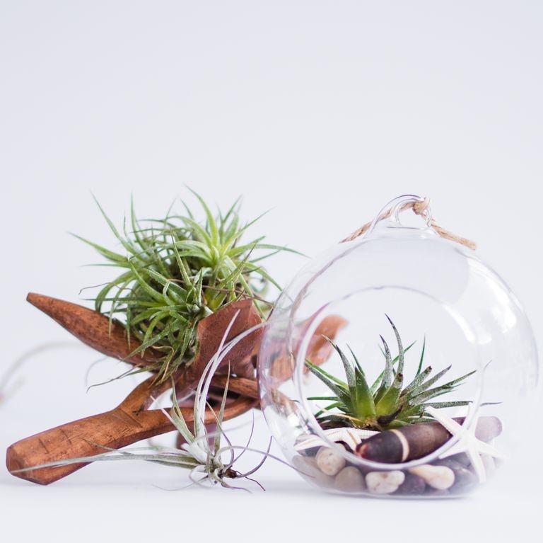 Gợi ý 9 loại cây cảnh tốt nhất có thể trồng trong nhà bếp để làm sáng không gian nhà bạn-5