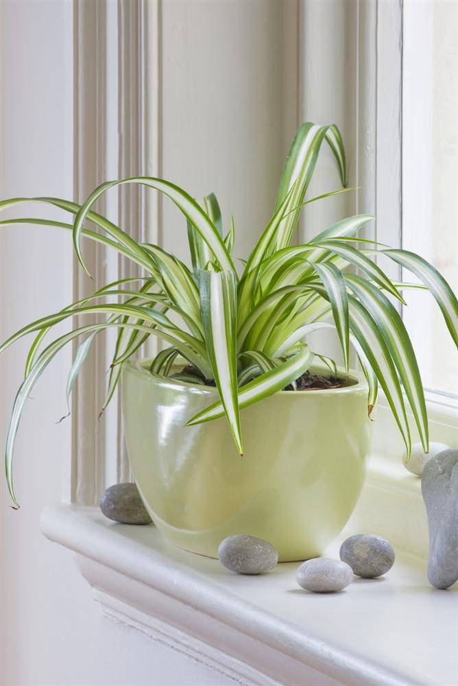 Gợi ý 9 loại cây cảnh tốt nhất có thể trồng trong nhà bếp để làm sáng không gian nhà bạn-8