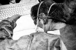 Cô gái Hàn Quốc bị đấm trật khớp hàm vì không đeo khẩu trang ở Mỹ-2