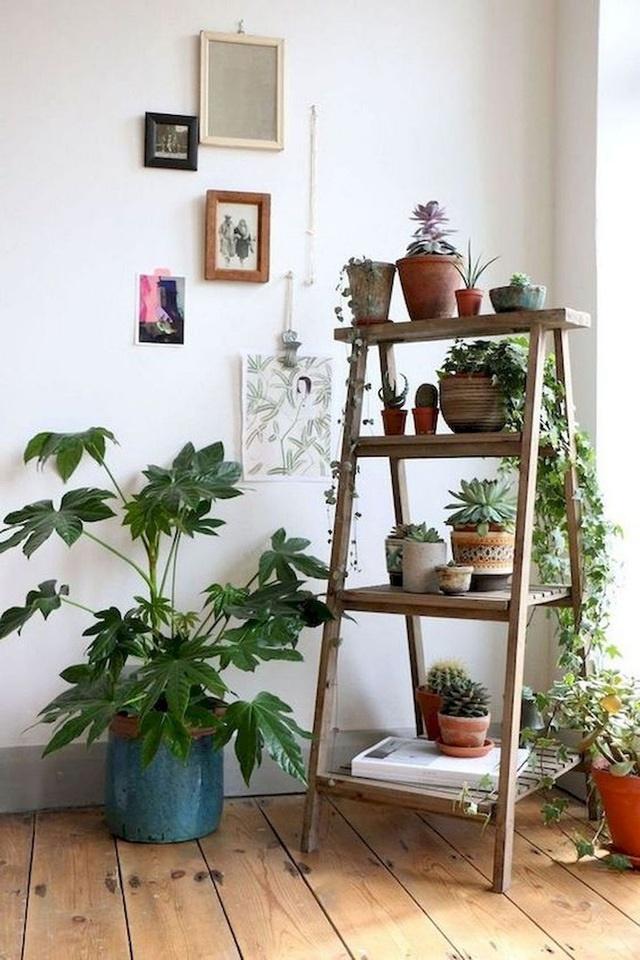 Trồng ngay 5 loại cây này trong nhà, vừa hút khí độc vừa làm đẹp không gian-1