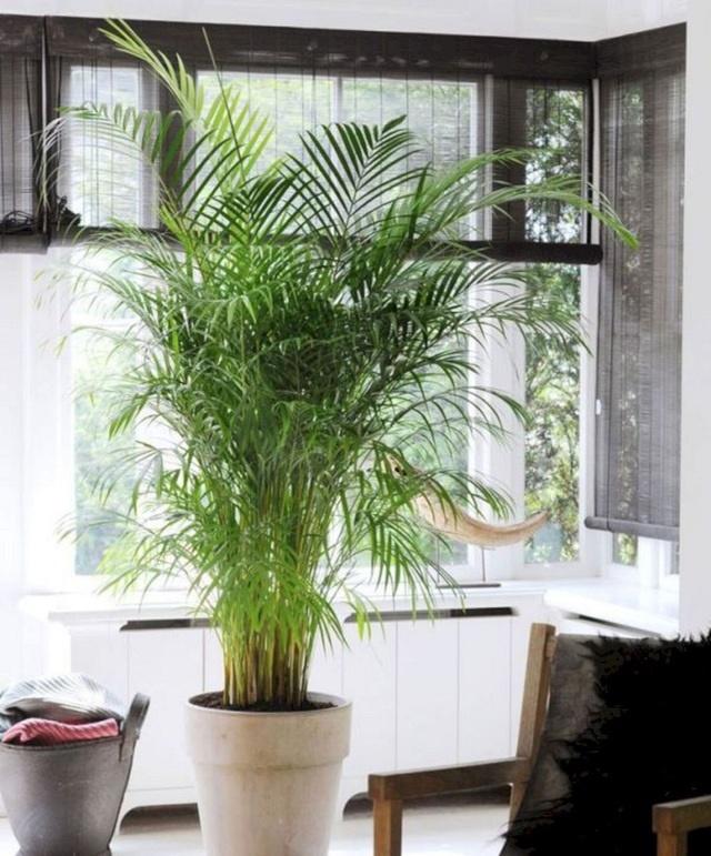 Trồng ngay 5 loại cây này trong nhà, vừa hút khí độc vừa làm đẹp không gian-3