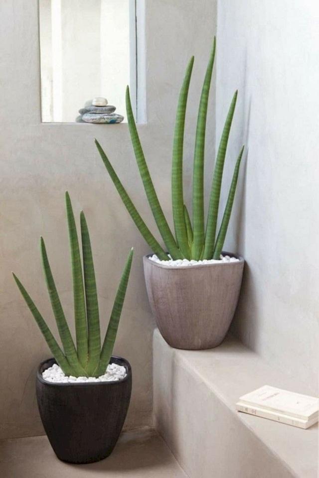 Trồng ngay 5 loại cây này trong nhà, vừa hút khí độc vừa làm đẹp không gian-5