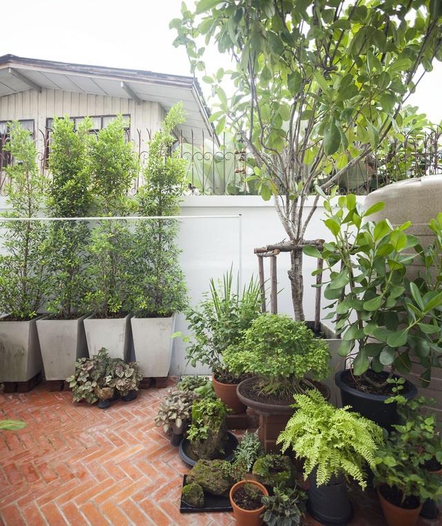 """Choáng ngợp ngôi nhà 300m2 với khu vườn bonsai toàn cây khủng""""-5"""