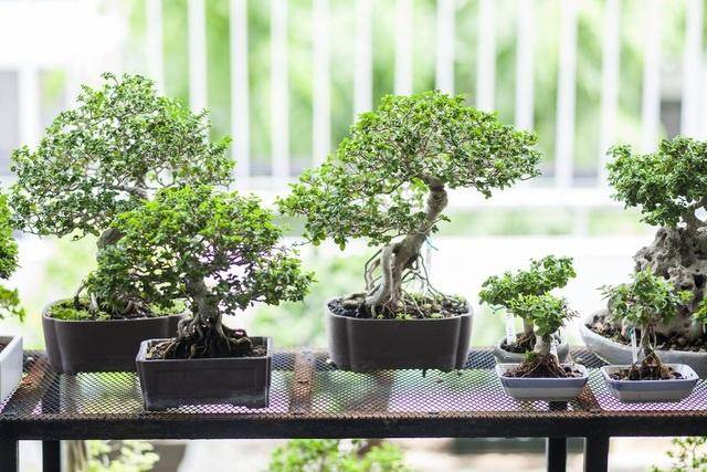 """Choáng ngợp ngôi nhà 300m2 với khu vườn bonsai toàn cây khủng""""-8"""