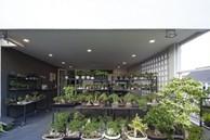 """Choáng ngợp ngôi nhà 300m2 với khu vườn bonsai toàn cây """"khủng"""""""