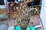Ăn 6 kg cua mất 5 triệu, khách tố nhà hàng Quảng Ninh chặt chém-2