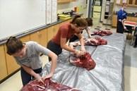 Trường học cho học sinh mổ thịt động vật để học kỹ năng sống, bất ngờ nhất là phản ứng của phụ huynh