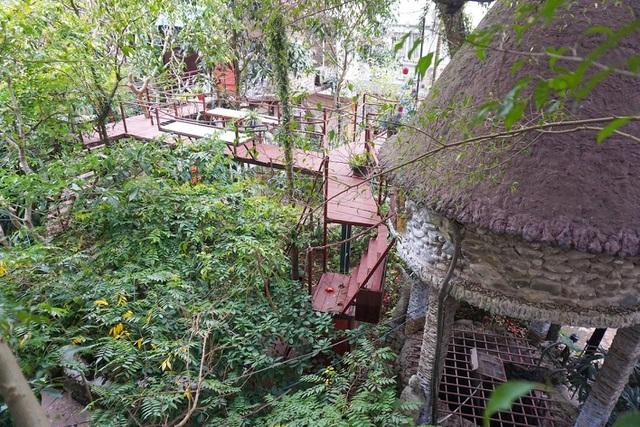 Kỳ lạ quần thể nhà xây dựng trên cây cổ thụ trăm tuổi độc nhất Hà Nội-1