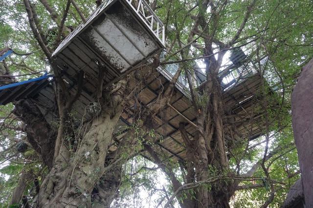 Kỳ lạ quần thể nhà xây dựng trên cây cổ thụ trăm tuổi độc nhất Hà Nội-7