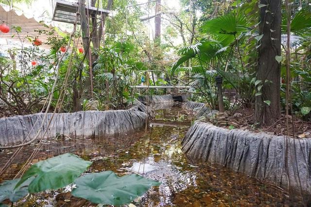 Kỳ lạ quần thể nhà xây dựng trên cây cổ thụ trăm tuổi độc nhất Hà Nội-13