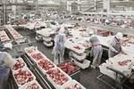 Thủ tướng: Kiên quyết đưa giá thịt lợn xuống dưới 60.000 đồng/kg-3