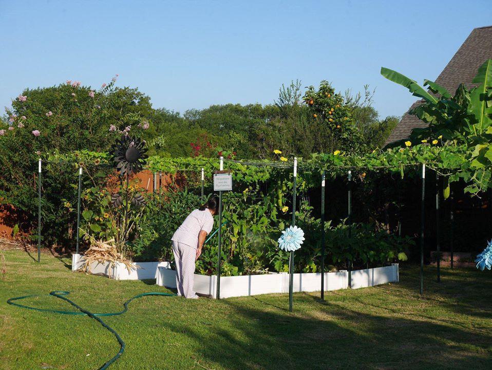 Khu vườn rộng 1000m² với đủ loại rau Việt do con gái tặng mẹ trên đất Mỹ xa xôi-1