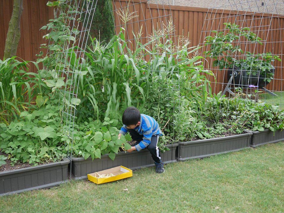 Khu vườn rộng 1000m² với đủ loại rau Việt do con gái tặng mẹ trên đất Mỹ xa xôi-18