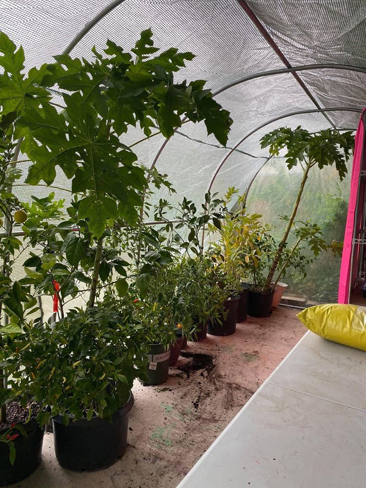 Khu vườn rộng 1000m² với đủ loại rau Việt do con gái tặng mẹ trên đất Mỹ xa xôi-22