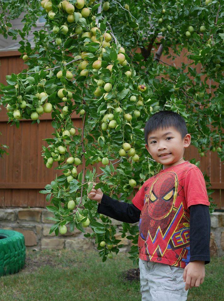 Khu vườn rộng 1000m² với đủ loại rau Việt do con gái tặng mẹ trên đất Mỹ xa xôi-23
