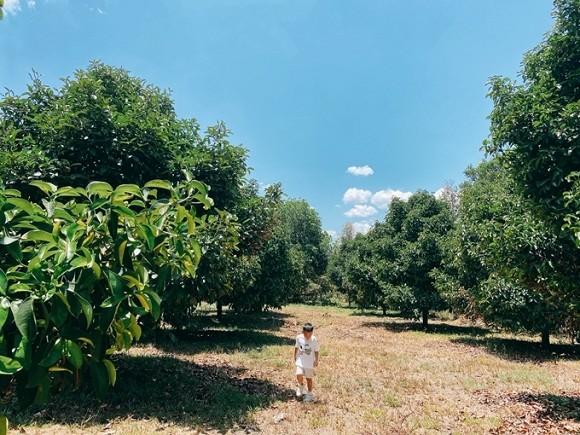 Khám phá khu vườn rộng 14.000 m2 của nhà thiết kế Đỗ Mạnh Cường-6
