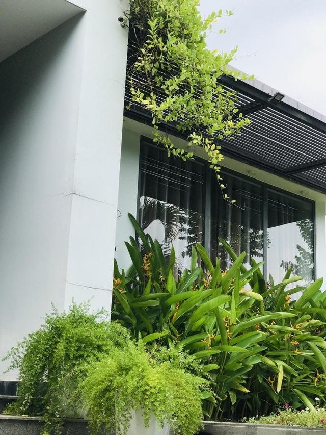 Chàng trai tự tay thiết kế nhà vườn vạn người mê cho gia đình 4 thế hệ-5