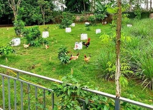 Là đại gia bất động sản Shark Hưng và vợ lại chọn ở nơi bình dị, trồng rau nuôi gà-4