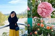 Biến ban công 3m² thành vườn hồng, mẹ Hà Nội ngày nào cũng chụp ảnh gửi chồng xem