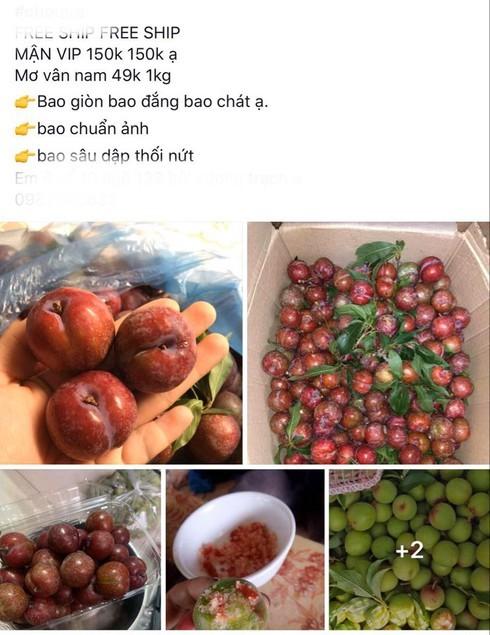 Mận đầu mùa giá chát, tiểu thương Hà Nội hét giá 200 nghìn đồng/kg-2