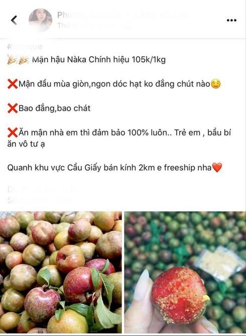 Mận đầu mùa giá chát, tiểu thương Hà Nội hét giá 200 nghìn đồng/kg-3