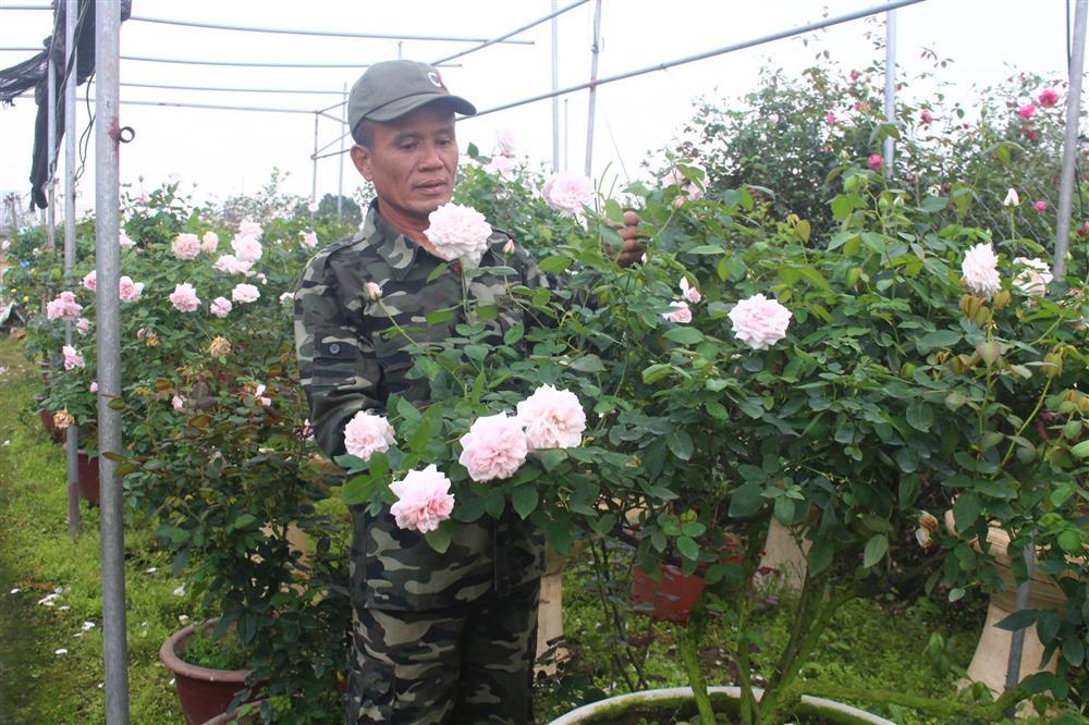 Vườn hoa hồng ngoại khủng 2 vạn cây của U60 ở làng hoa Xuân Quan-1