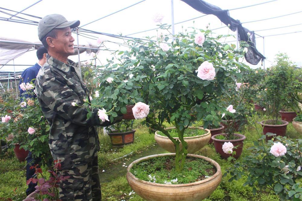 Vườn hoa hồng ngoại khủng 2 vạn cây của U60 ở làng hoa Xuân Quan-4