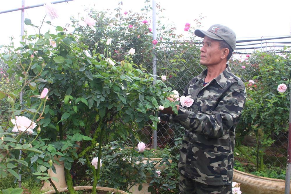 Vườn hoa hồng ngoại khủng 2 vạn cây của U60 ở làng hoa Xuân Quan-8