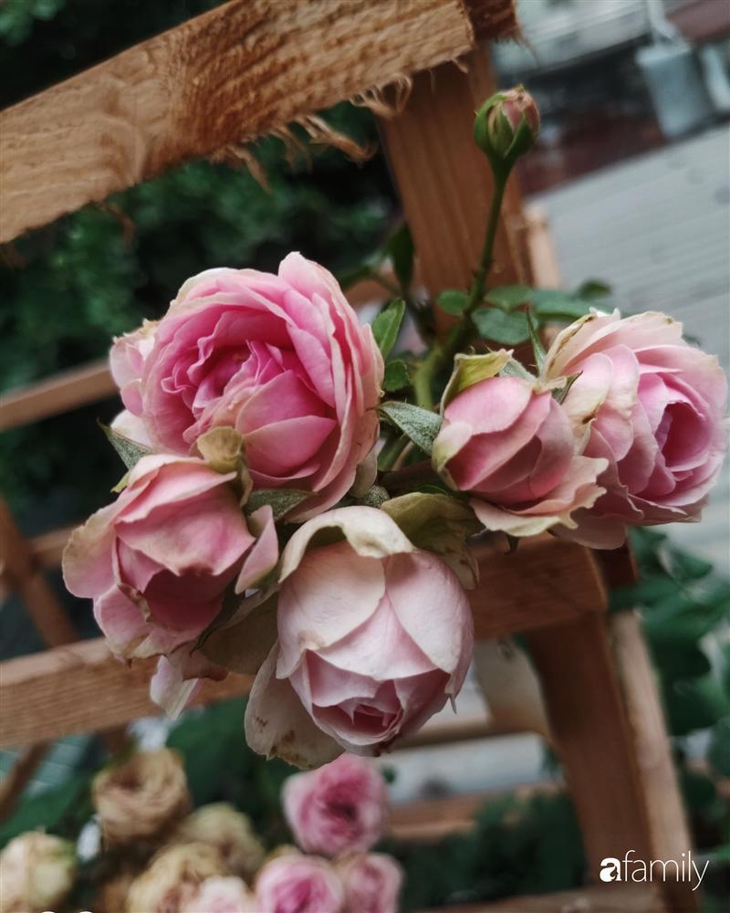 Ngôi nhà đẹp yên bình, lãng mạn nhờ người đàn ông đảm đang tự decor vườn và trồng đủ loại hồng ở Sài Gòn-5