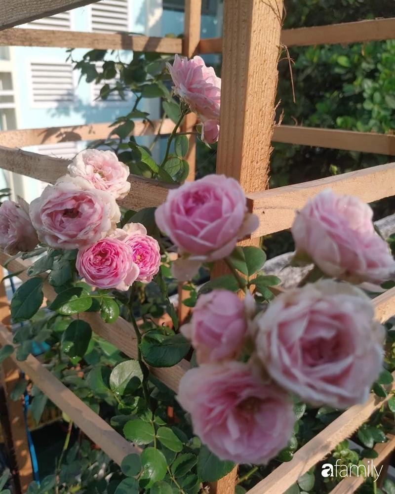 Ngôi nhà đẹp yên bình, lãng mạn nhờ người đàn ông đảm đang tự decor vườn và trồng đủ loại hồng ở Sài Gòn-7