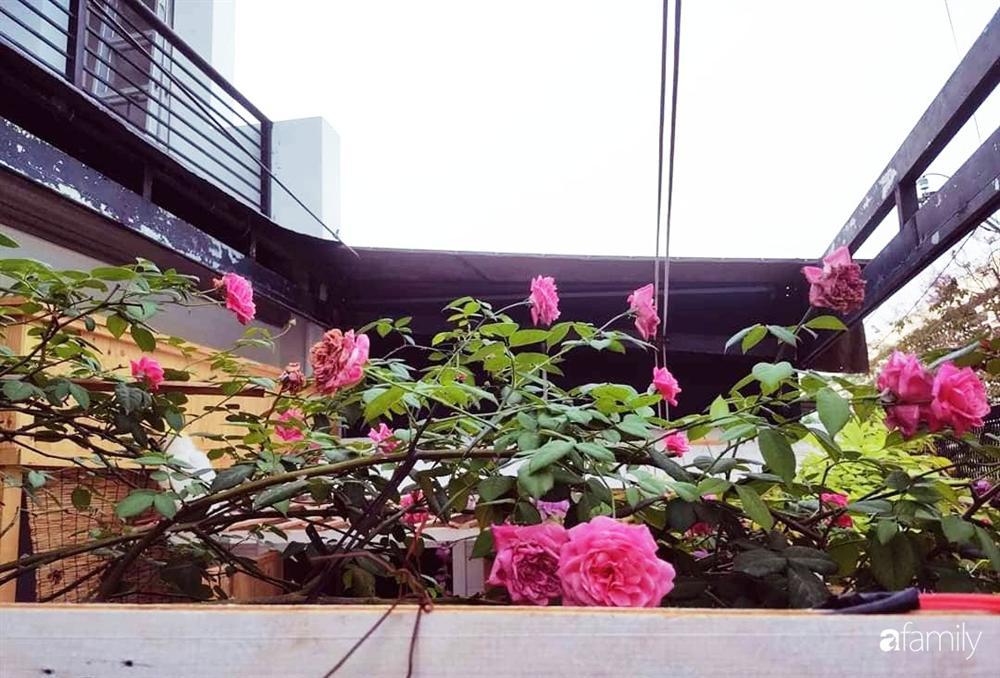 Ngôi nhà đẹp yên bình, lãng mạn nhờ người đàn ông đảm đang tự decor vườn và trồng đủ loại hồng ở Sài Gòn-17