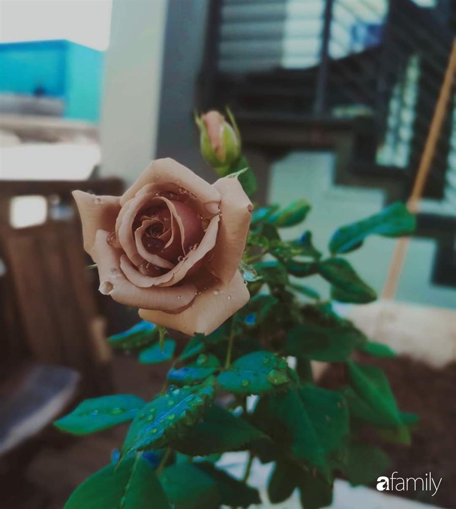 Ngôi nhà đẹp yên bình, lãng mạn nhờ người đàn ông đảm đang tự decor vườn và trồng đủ loại hồng ở Sài Gòn-23