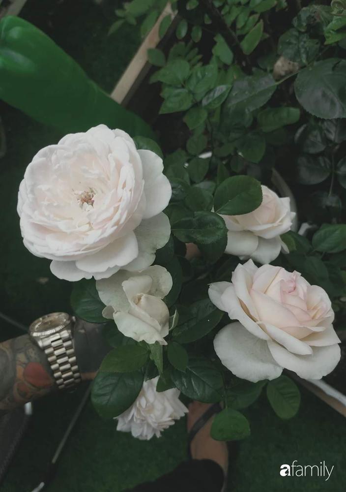 Ngôi nhà đẹp yên bình, lãng mạn nhờ người đàn ông đảm đang tự decor vườn và trồng đủ loại hồng ở Sài Gòn-24